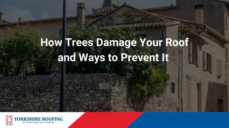 How Trees Damage Your Roof and Ways to Prevent It